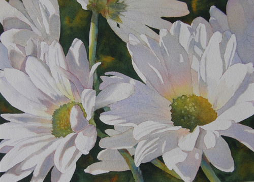Daisy Bunch (large view)