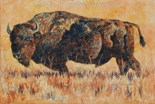 Bison Study