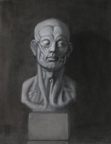 Ecorche Head