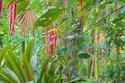 Jungle Road #2, Hawaii