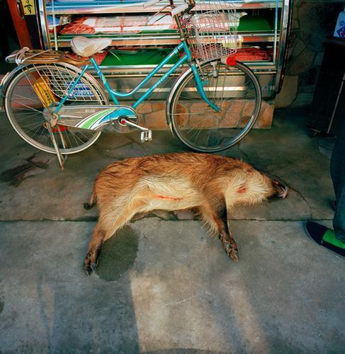 Wild Pig, Village Market, Japan