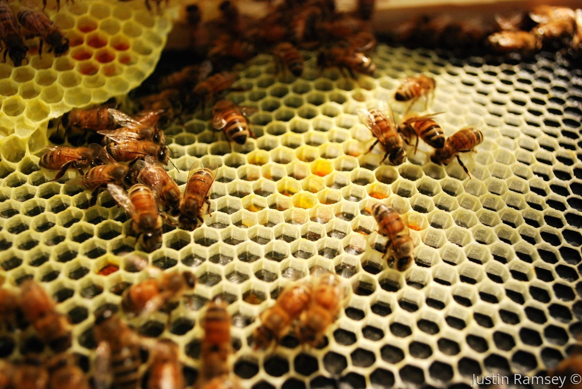 Honeycomb Hustle (large view)