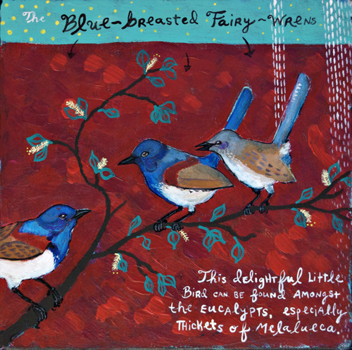 Blue-breasted Fairy-wren