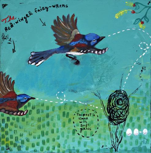 Red-winged Fairy-wren