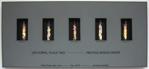 Specimen Display Case III by Judy Werlin
