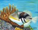 Picasso Fish (thumbnail)