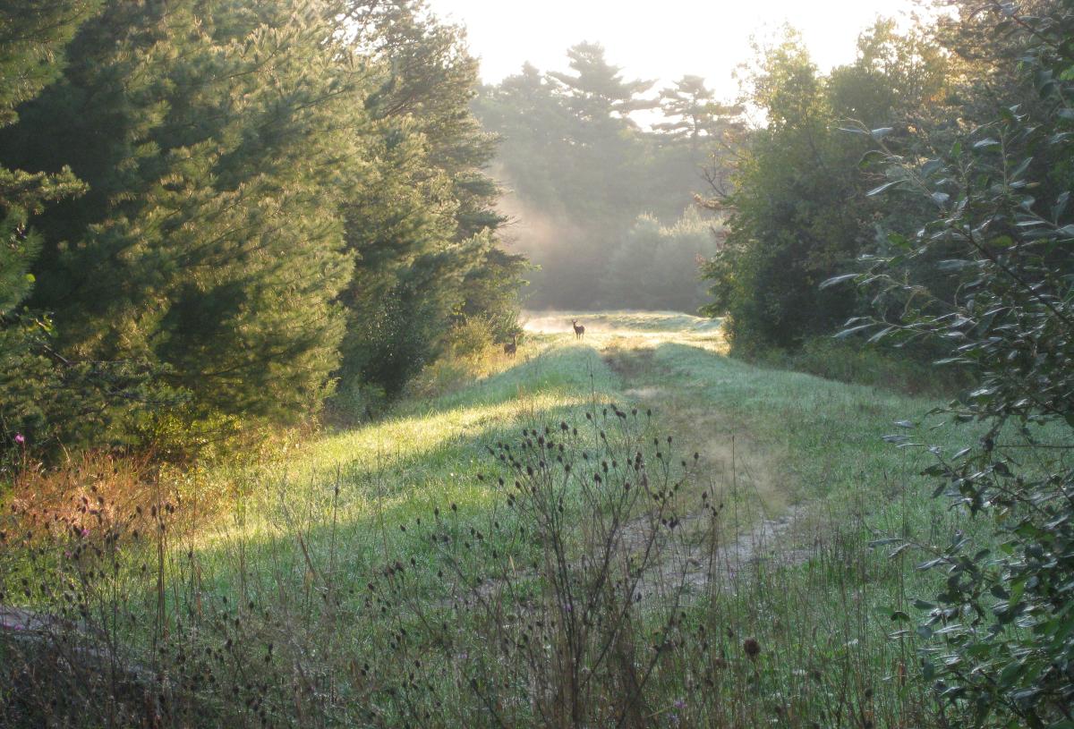 Raynham Deer (large view)