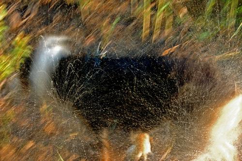 Splash by Karen Callan