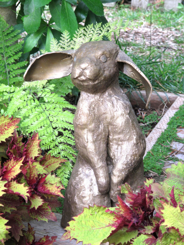 Bronze Pantaloon Rabbit