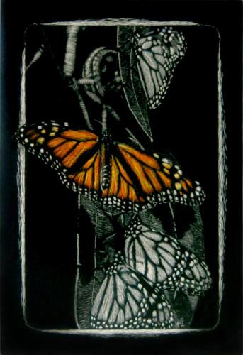 Monarch in Color