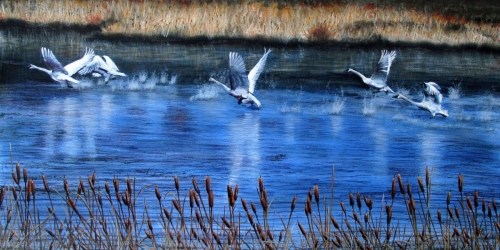 TAKING OFF by Karen Peterson