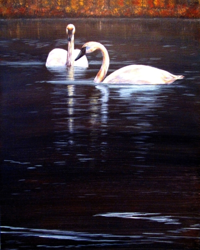 TRUMPETER SWANS by Karen Peterson