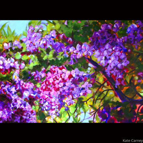 In the Lilacs