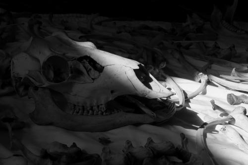 Skull and Bones 6