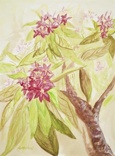 Plumeria by Katharine Holmquest Poole