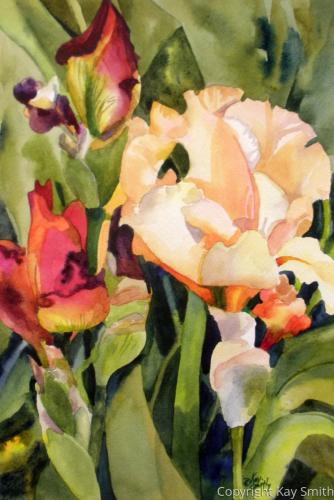 Apricot Irises