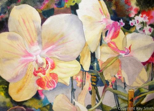 Alldredge Gardens Orchids