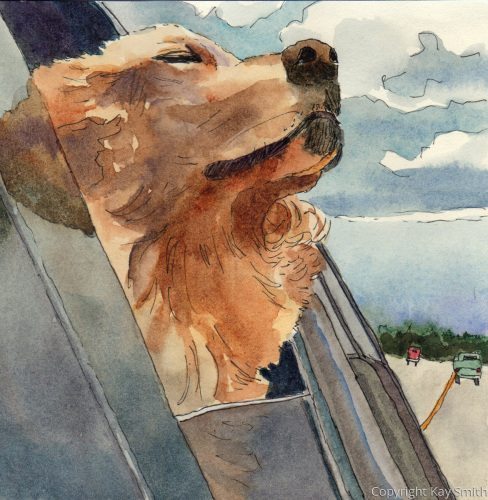 Airhead Dog