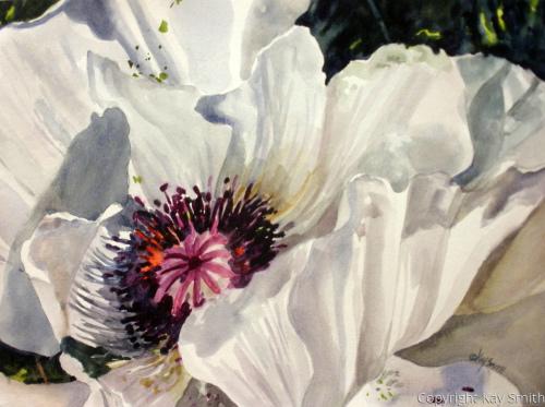 Stephie's White Poppy