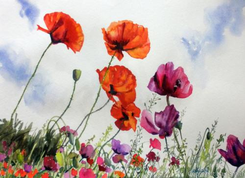 Proud Poppies