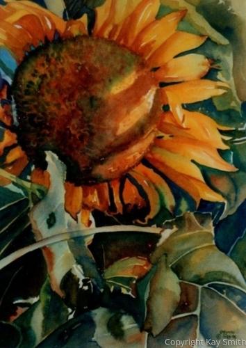 Onetas Sunflower Face