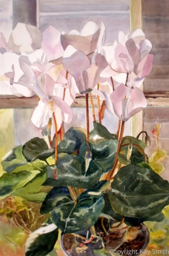 White Cyclamen by Kay Smith