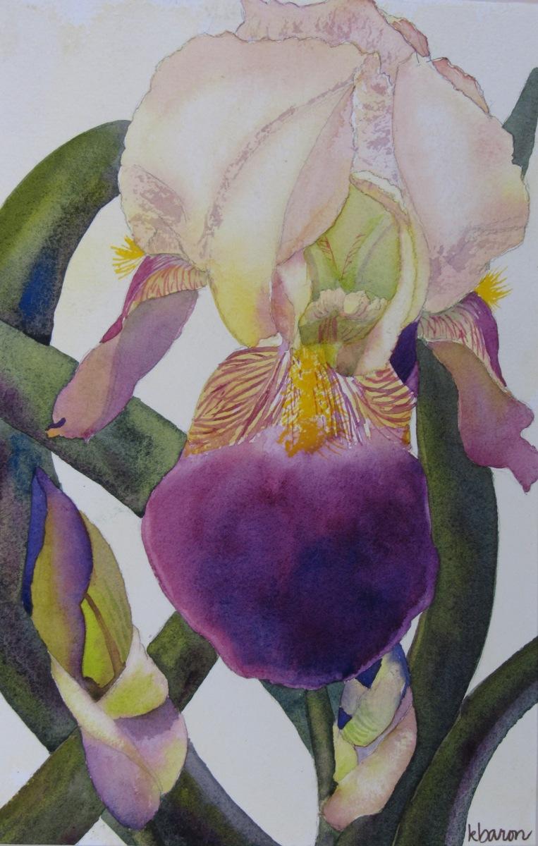 Yellow Iris (large view)