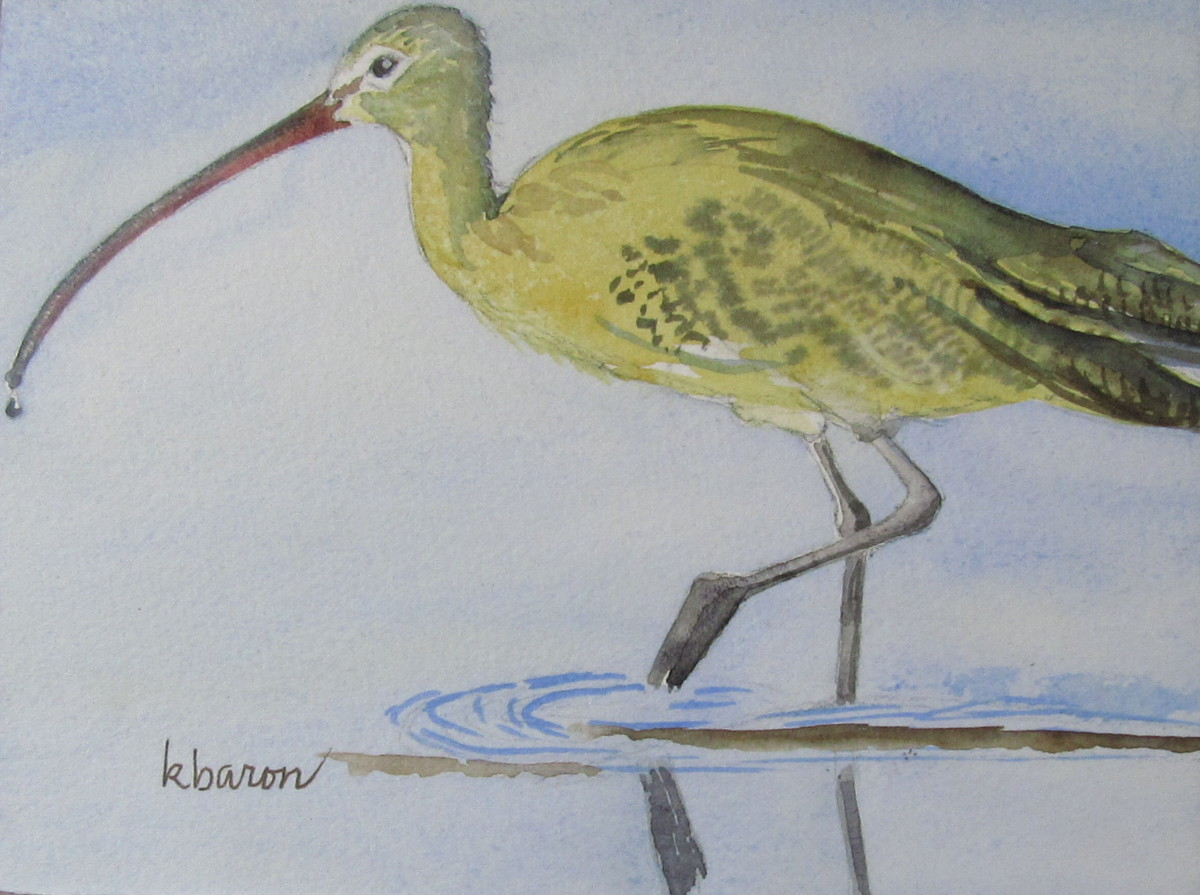 Curlew (large view)