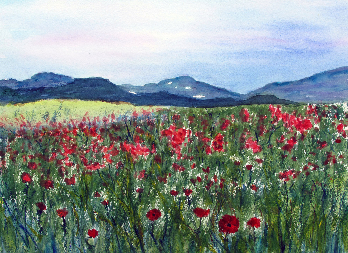 Poppy Field (large view)