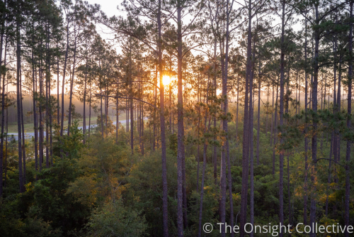 Sunrise in a Georgia Forrest by The Onsight Collective