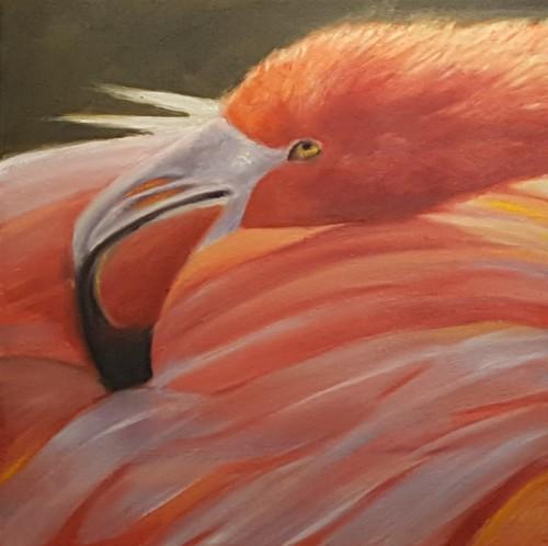 Flamigo Fancy Feathers