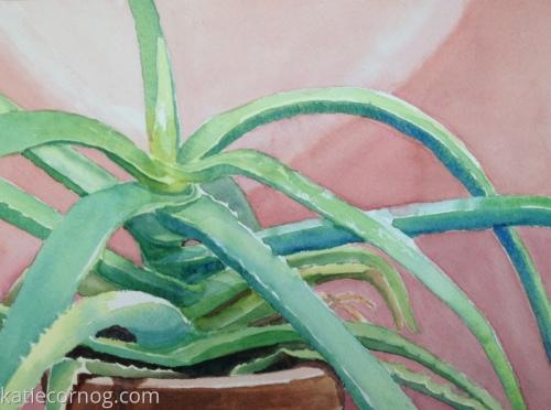 Aloe by Katie Cornog