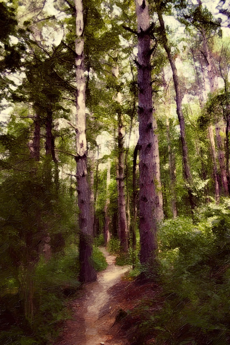 A WALK IN THE WOODS (large view)