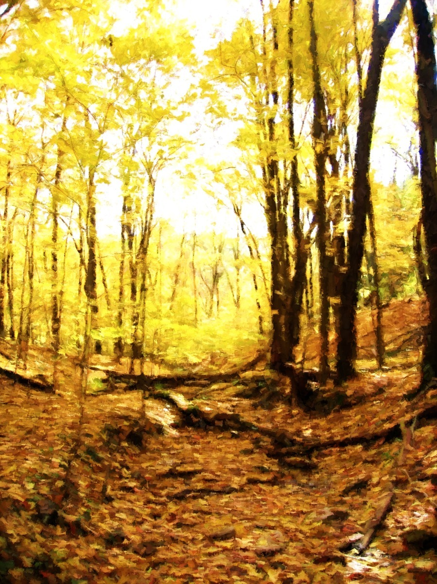 FALL CREEKBED (large view)