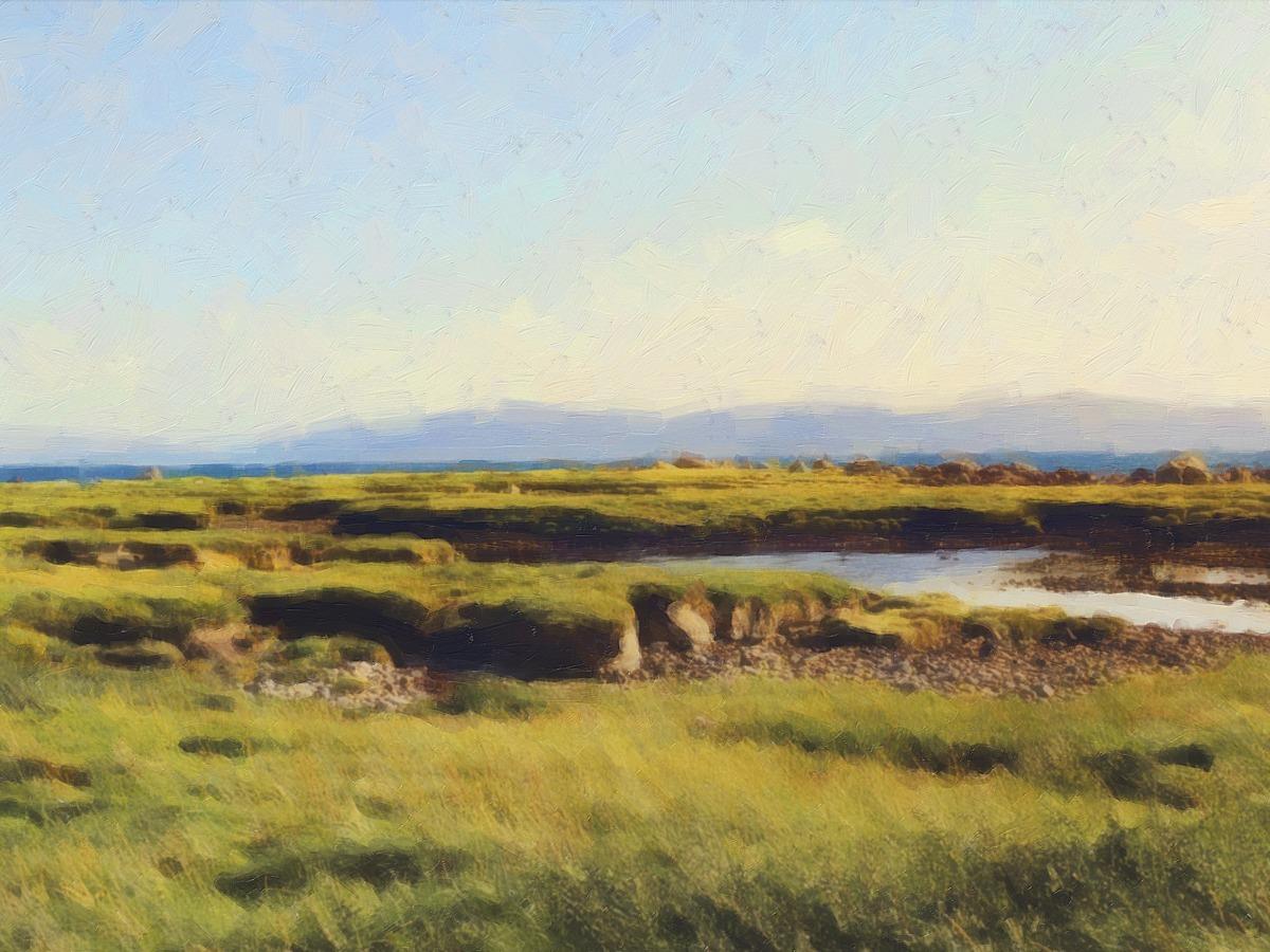 IRISH BOG (large view)