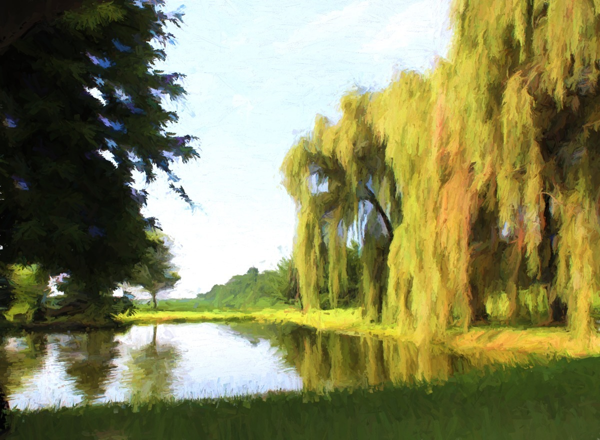 THE WILLOWS (large view)