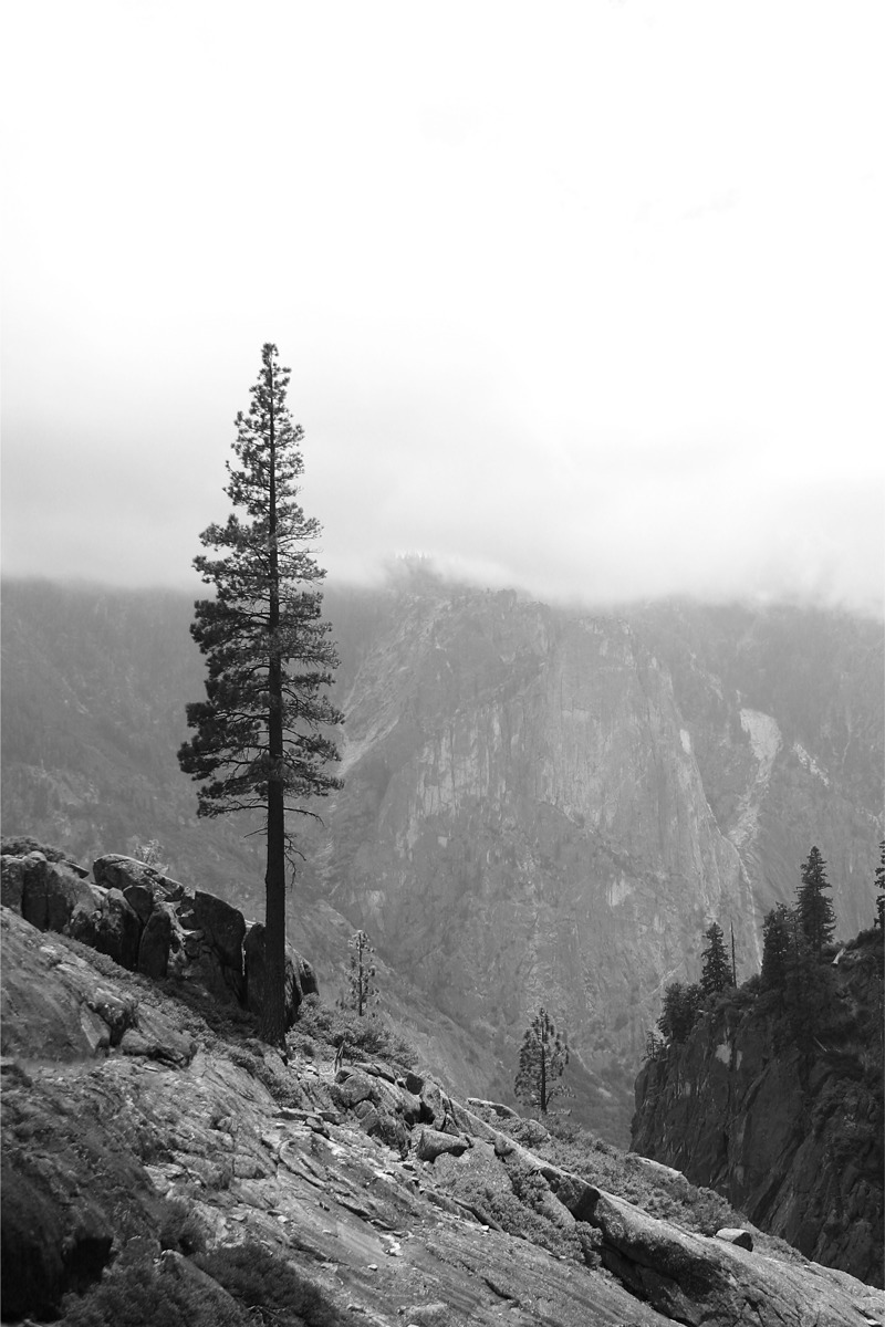 LONE PINE (large view)