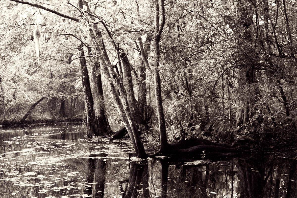 THE BAYOU (large view)