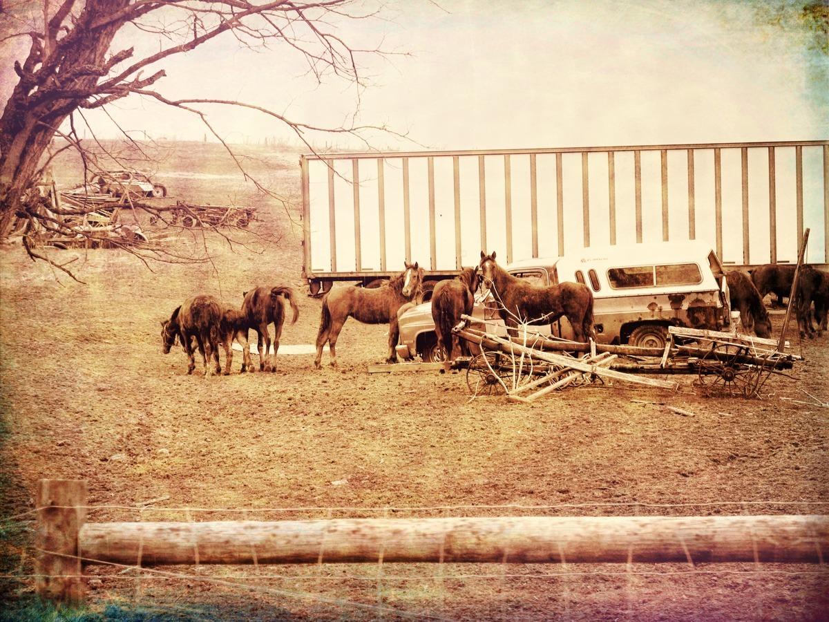 JUNK YARD HORSES (large view)