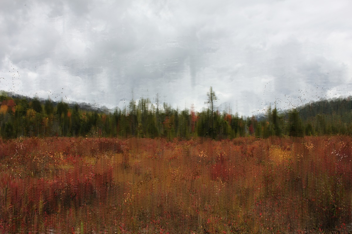 CRANBERRY BOGS (large view)