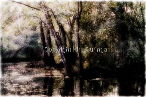 Bayou Swamp (large view)