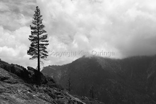 Yosemite #4 (large view)