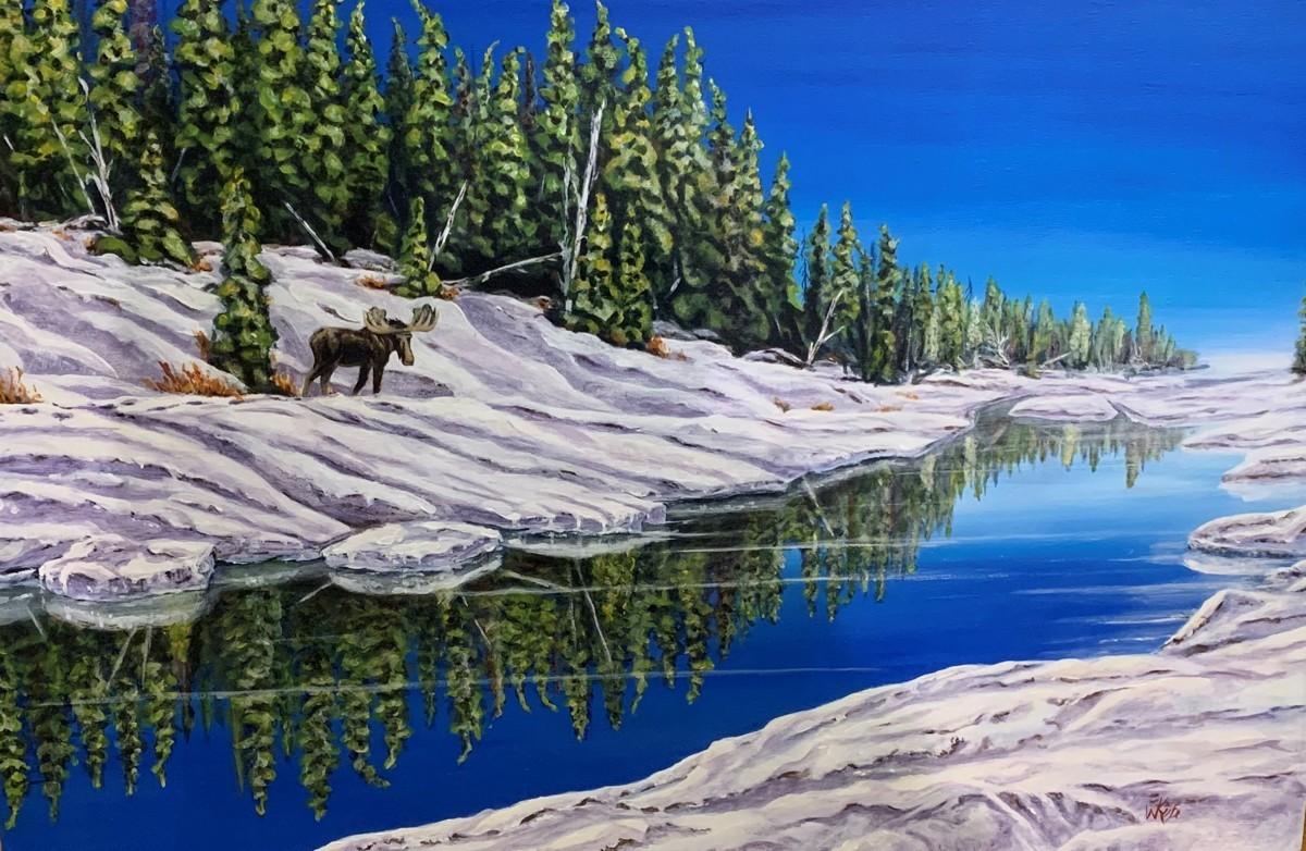 LONE BULL – YATES RIVER, BUFFALO LAKE, NWT ( HE'S LOOKING AT YOU !) (large view)
