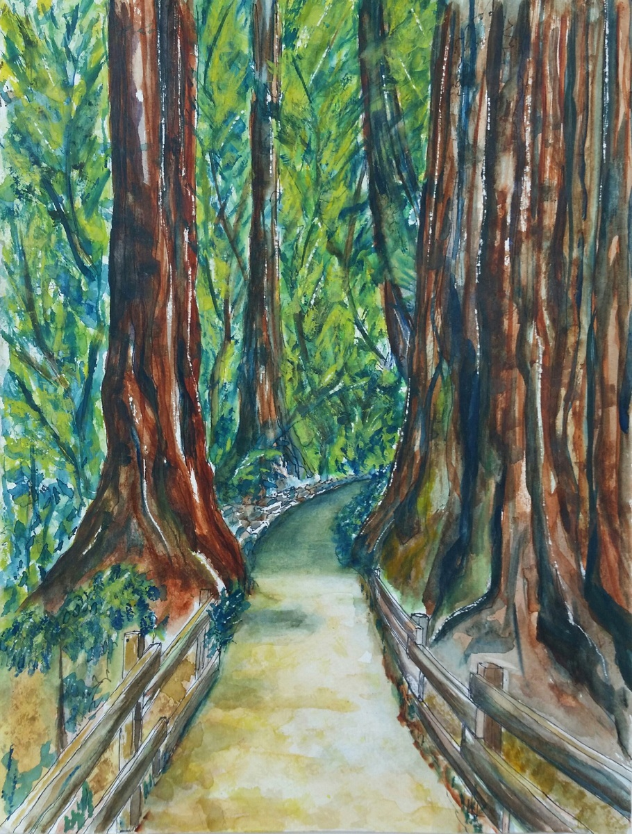 Muir Woods (large view)