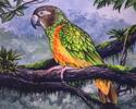 Exotic Bird 2