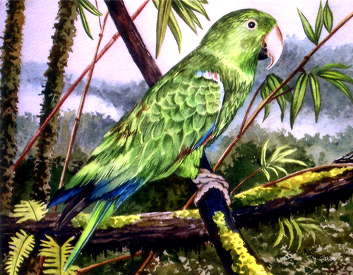 Exotic Bird 1
