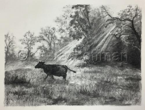 Cow's Morning Walk, Nimrod Hall, Virginia