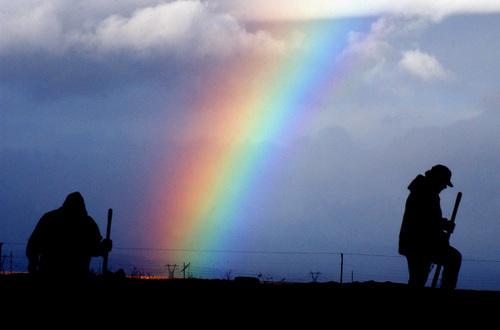 desert spectrum