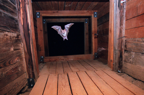 Bat in Mine Shaft by Kevin Marty