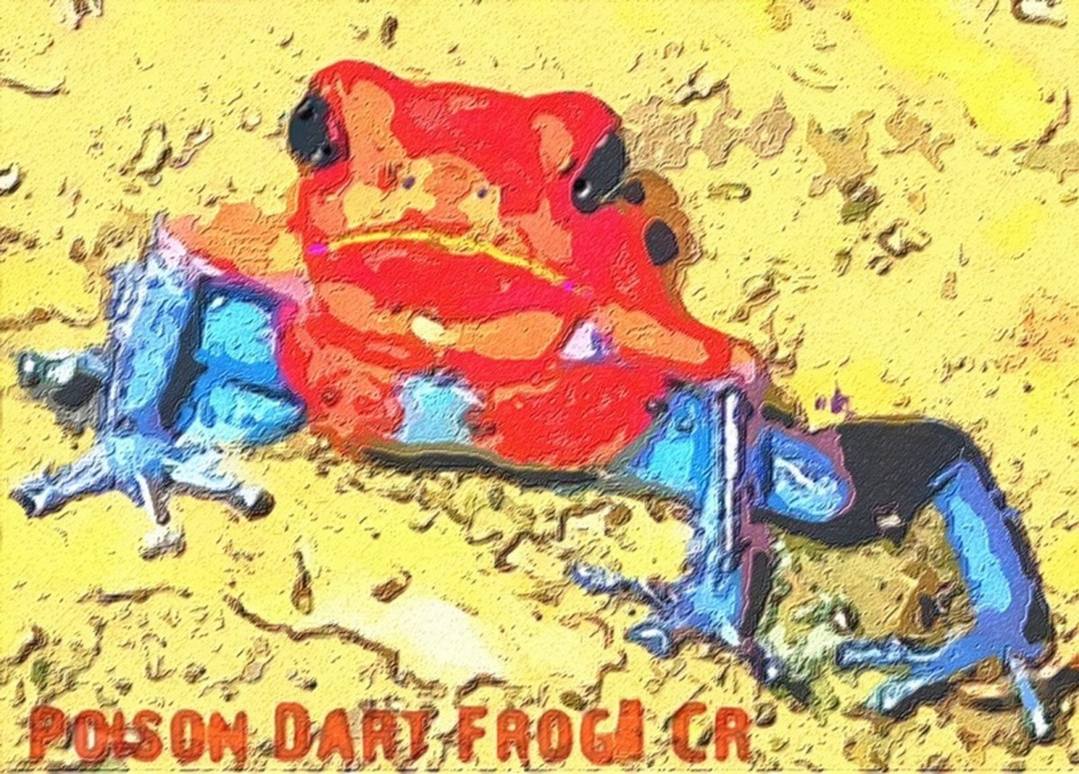 Poison Dart Frog (large view)